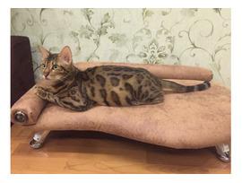 Диван для кошек и собак